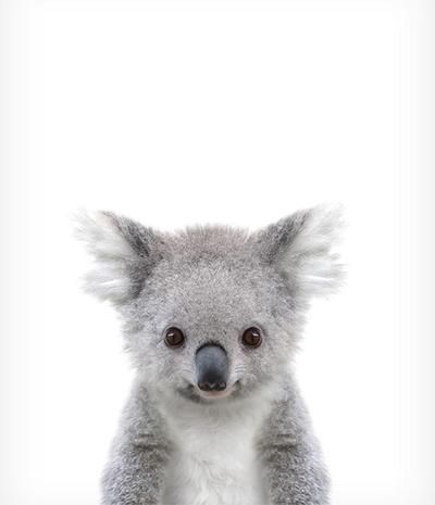 Baby Koala Printable Art Baby animal nursery, Cute baby