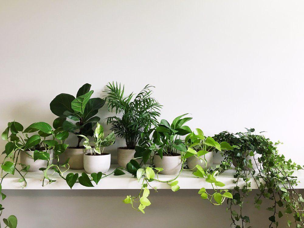 Planten Slaapkamer Baby : Plant babies decoratie pinterest werkkamer slaapkamer en planten