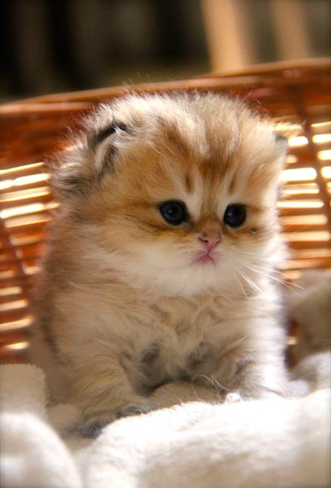 This baby has no neck lol   Katzen, Babytiere, Niedliche ...