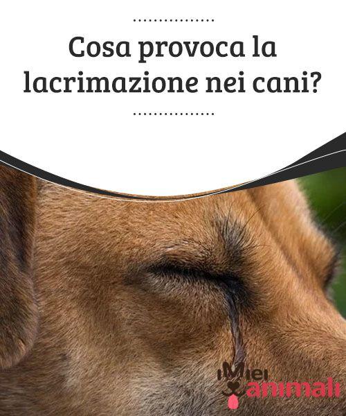 Come riconoscere la cataratta nei cani: sintomi e cure