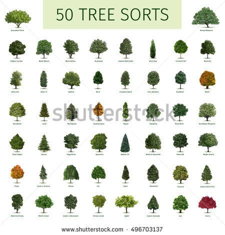 Fifty Diffe Tree Sorts With Names Ilrations Of Types