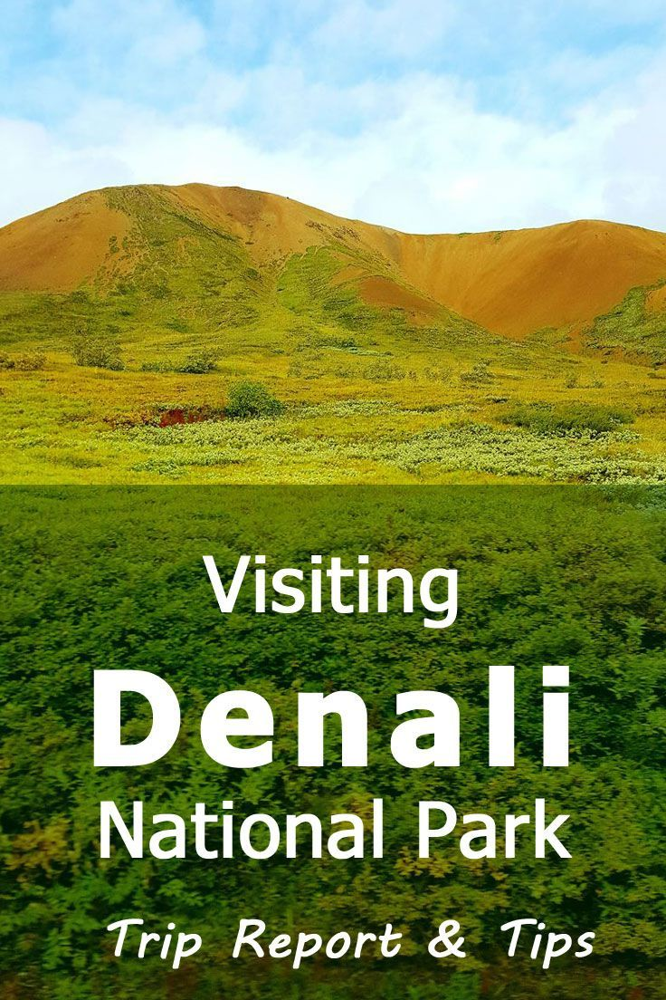 Visiting Denali National Park  Trip Report  Tips  Park Alaska