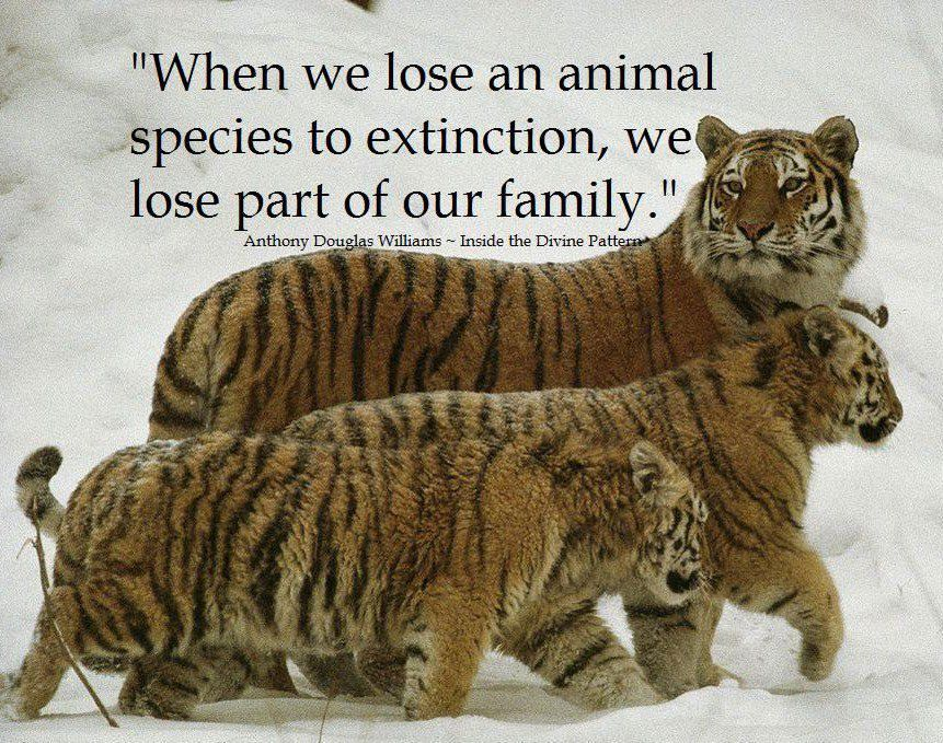 Quote On Extinction By Anthony DouglasDont Give Up World