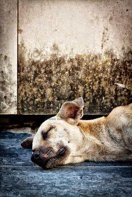 Fieggentrio: Gedicht bij het naderende afscheid van je hond (2)...