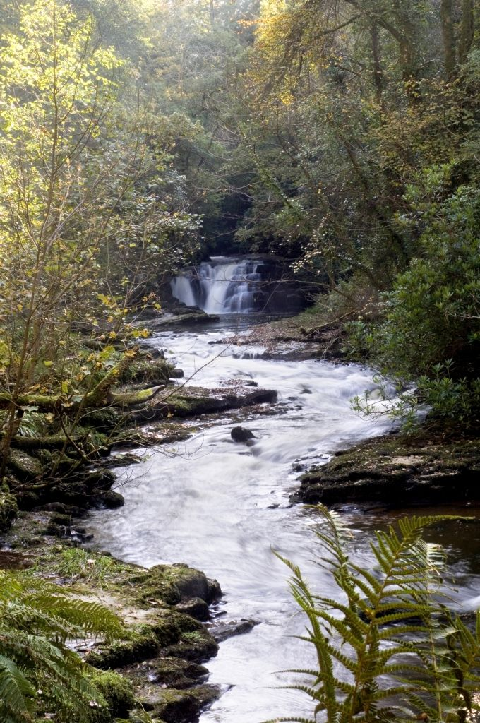 Enjoy picturesque walks at the Clare Glens Forest Trails just outside Limerick