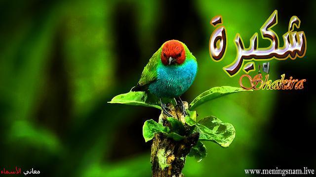 معنى اسم شكيرة وصفات حاملة هذا الإسم Shakira Shakira Animals Bird