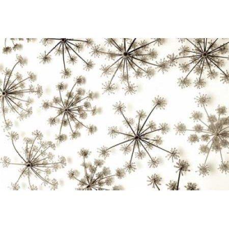 Posterazzi Garden Bloom - 20 Canvas Art - Alan Blaustein (12 x 18)
