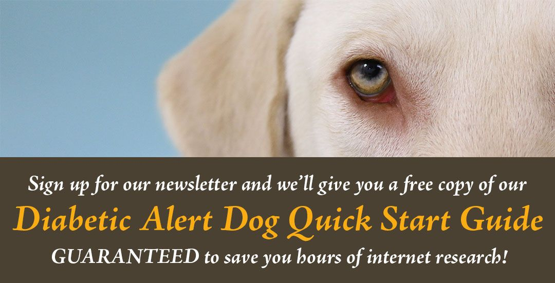 Seattle Diabetes Alert Dog Training Class Classes Alerts Dogs