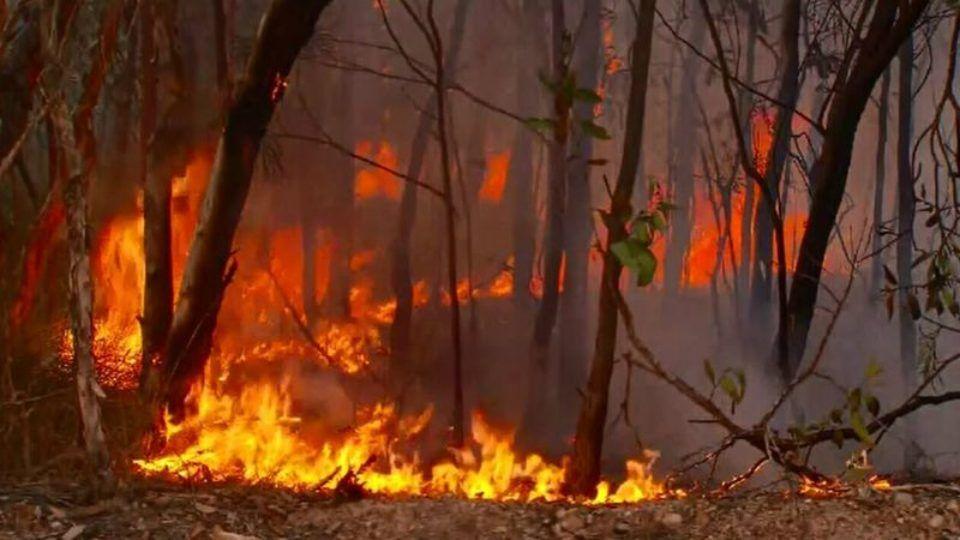 Queensland bushfire Creative writing ideas, Queensland