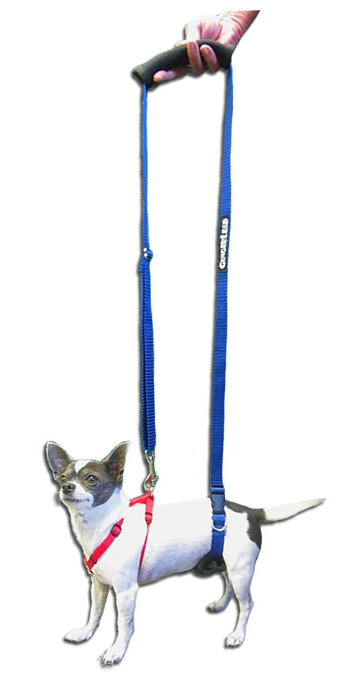 The Mini Gingerlead Dog Support Rehabilitation Harness Was