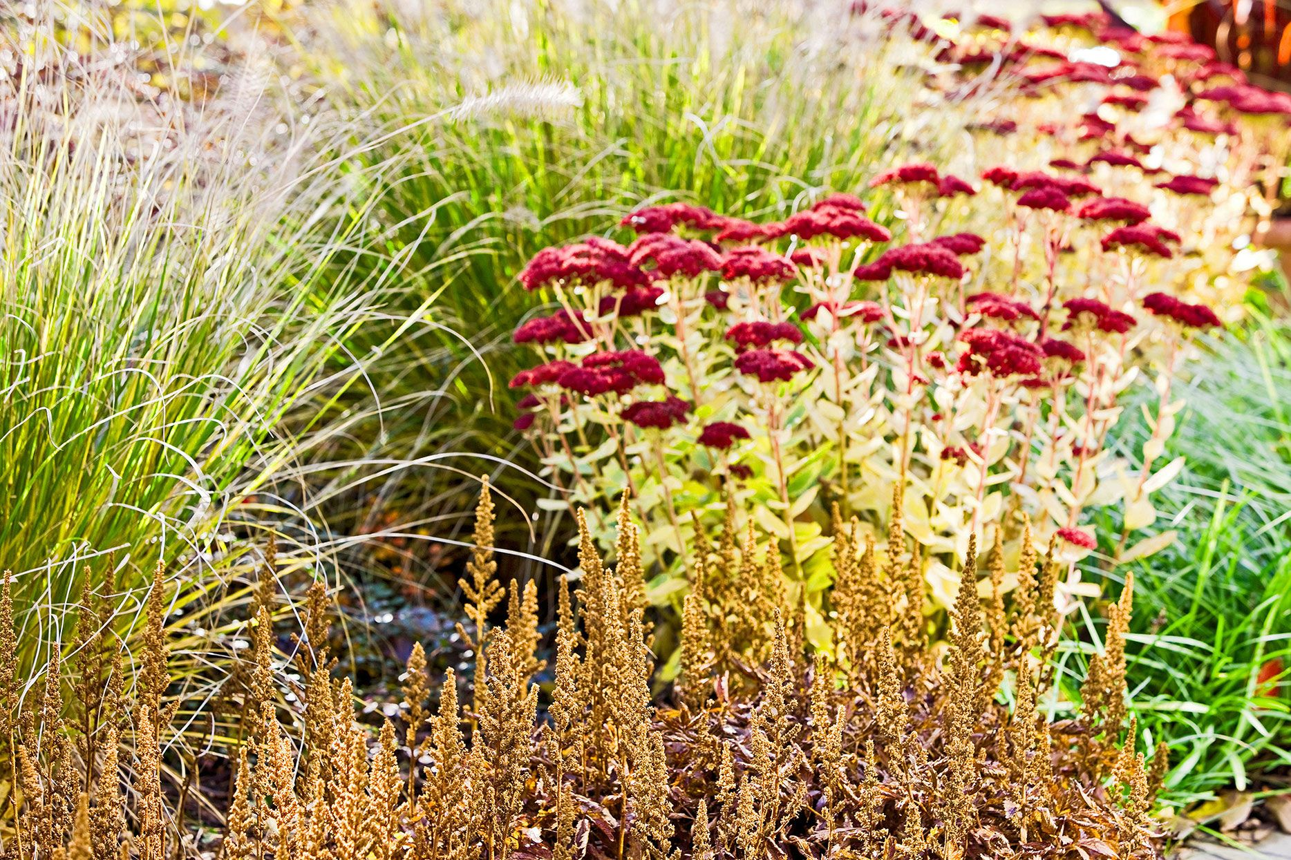 30 Ways To Pair Plants For The Most Beautiful Garden