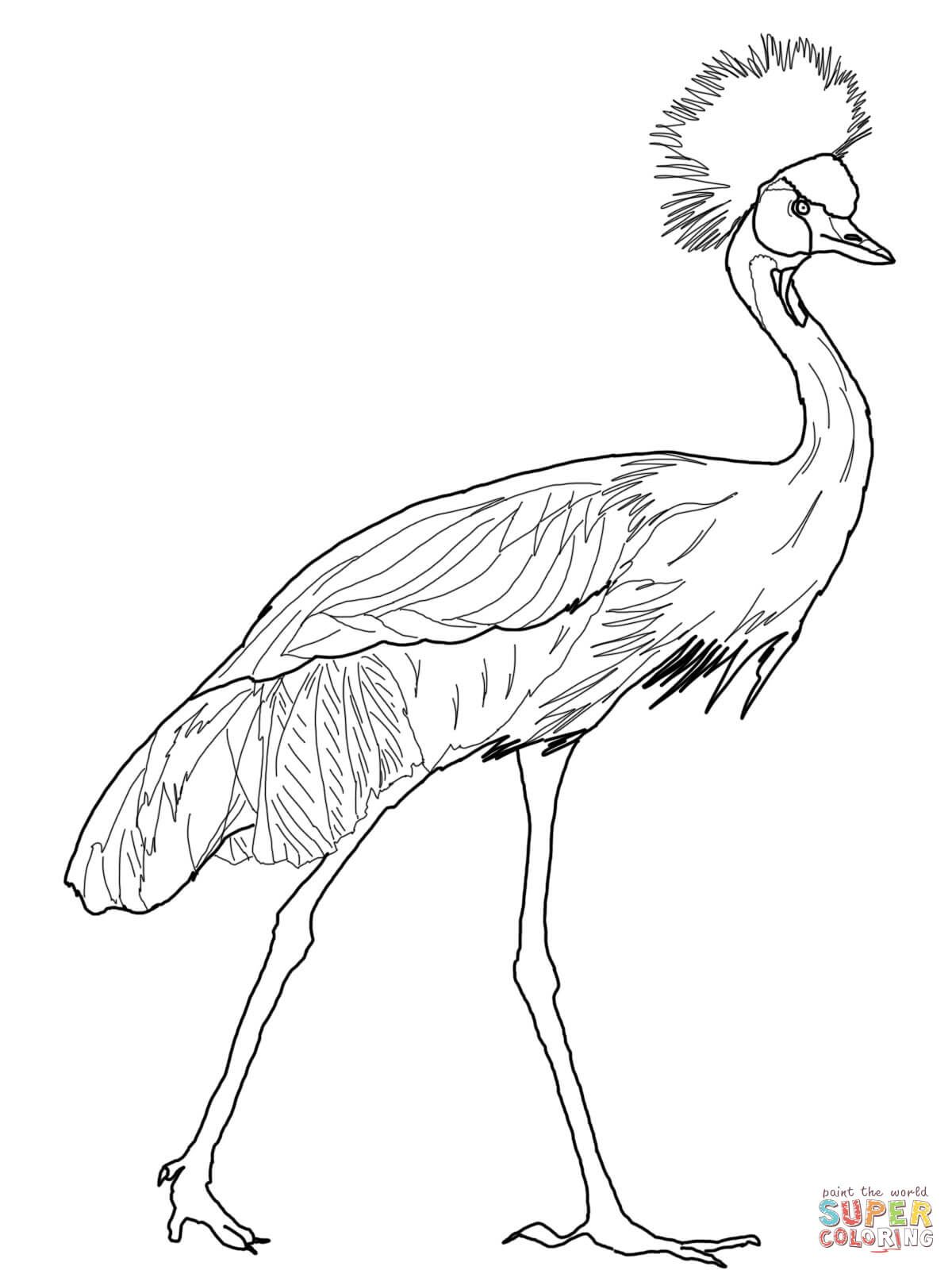 Black Crowned Crane Coloring Page Free Printable Coloring Pages