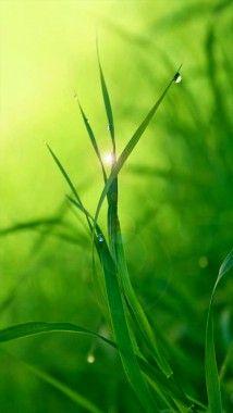 Green Grass Iphone Wallpaper Green Grass Tropical Landscaping Iphone Wallpaper