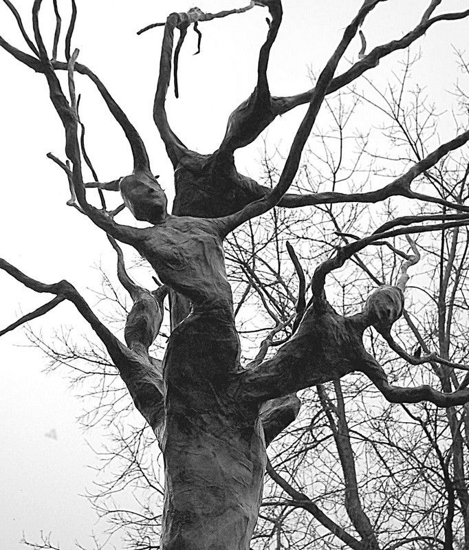 Tree Spirit Print Halloween trees, Haunted woods