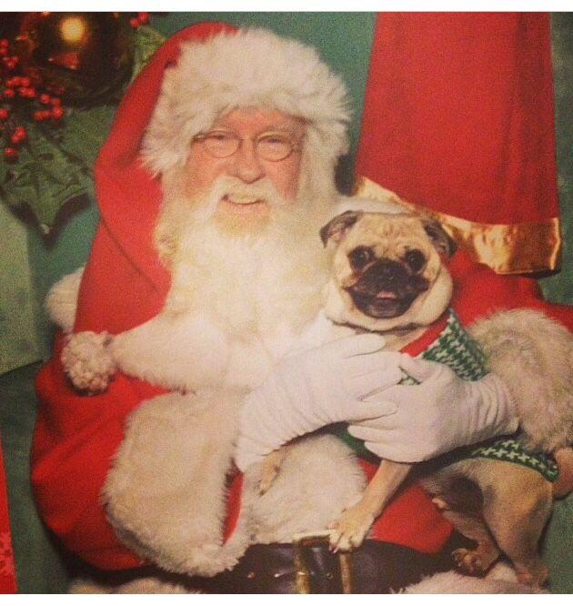 "Fender the pug and his ""omg it's really Santa"" face :) @barkbox"