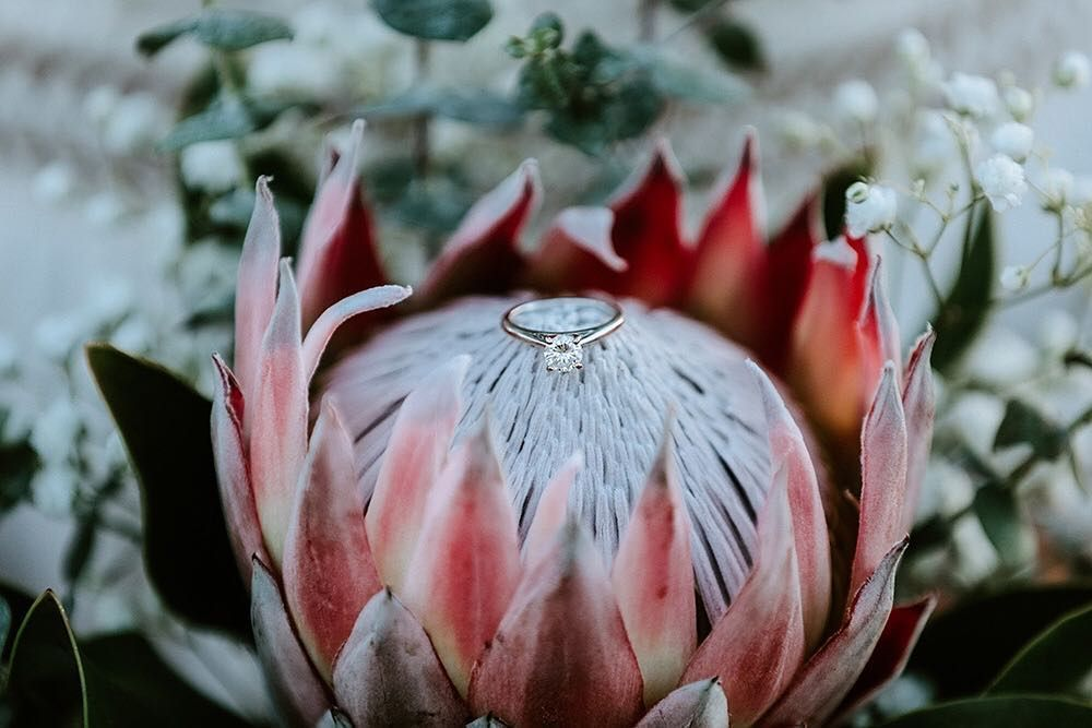 Consider How The Wild Flowers Grow They Do Not Labor Or Spin Yet I Tell You N Flowers Grow Labor Spin Wild In 2020 Protea Flower Growing Flowers Wild Flowers