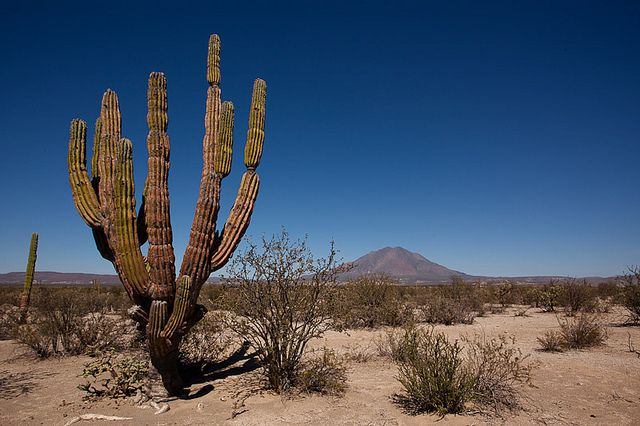 Cactus desert of Baja California, Mexico, via Flickr.