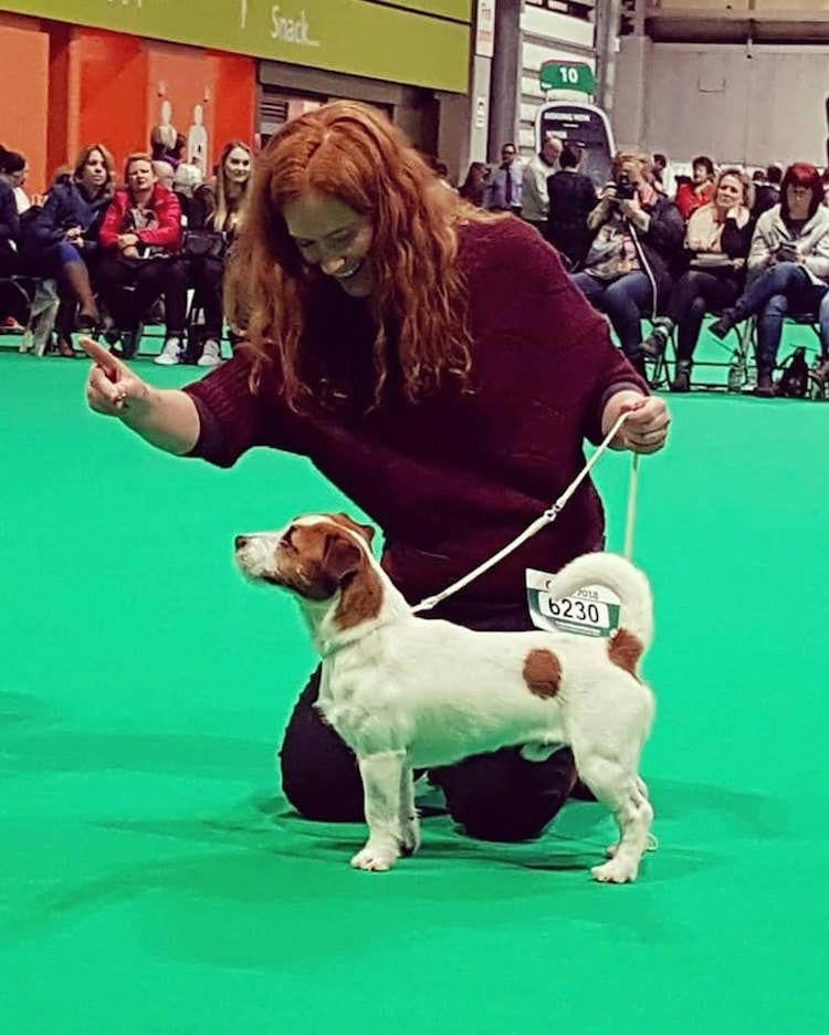 Cordial Focused Dog Health And Training Join The Beta Dog