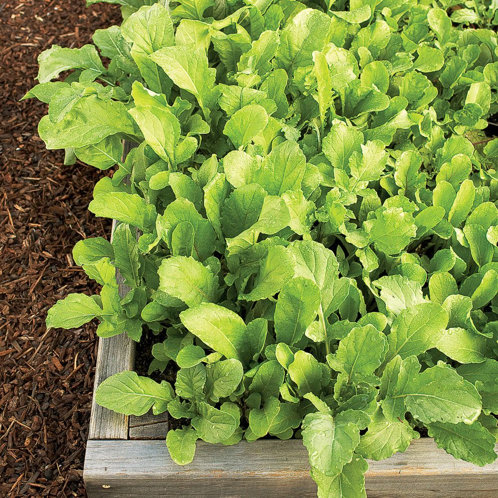 Advice For Planting Fall Vegetable Gardens: Winter Vegetable Gardening Guide