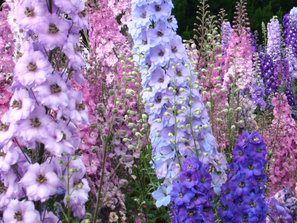 Annual Plants Last One Year But Give Lots Of Color To A Cottage Garden Snapdragons Delphiniums And Larkspur Annual Plants Cottage Garden Plants Annual Garden
