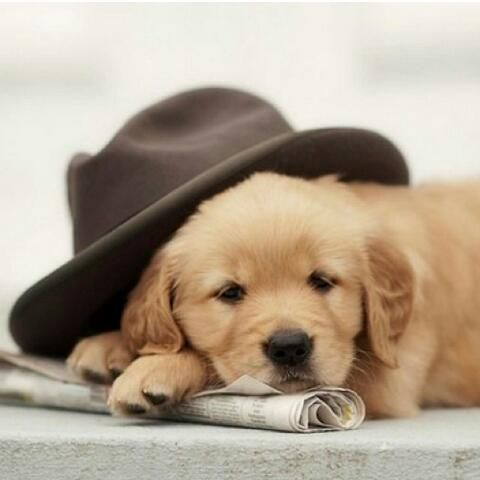 Good Puppy She Brought Us The Newspaper And The Gardener S Hat