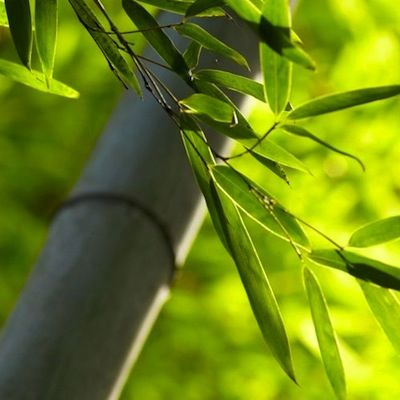 About Bamboo Farming: The Production Process into textiles