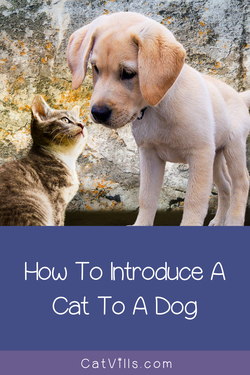 How to Introduce a Cat to a Dog (and to Another Cat in