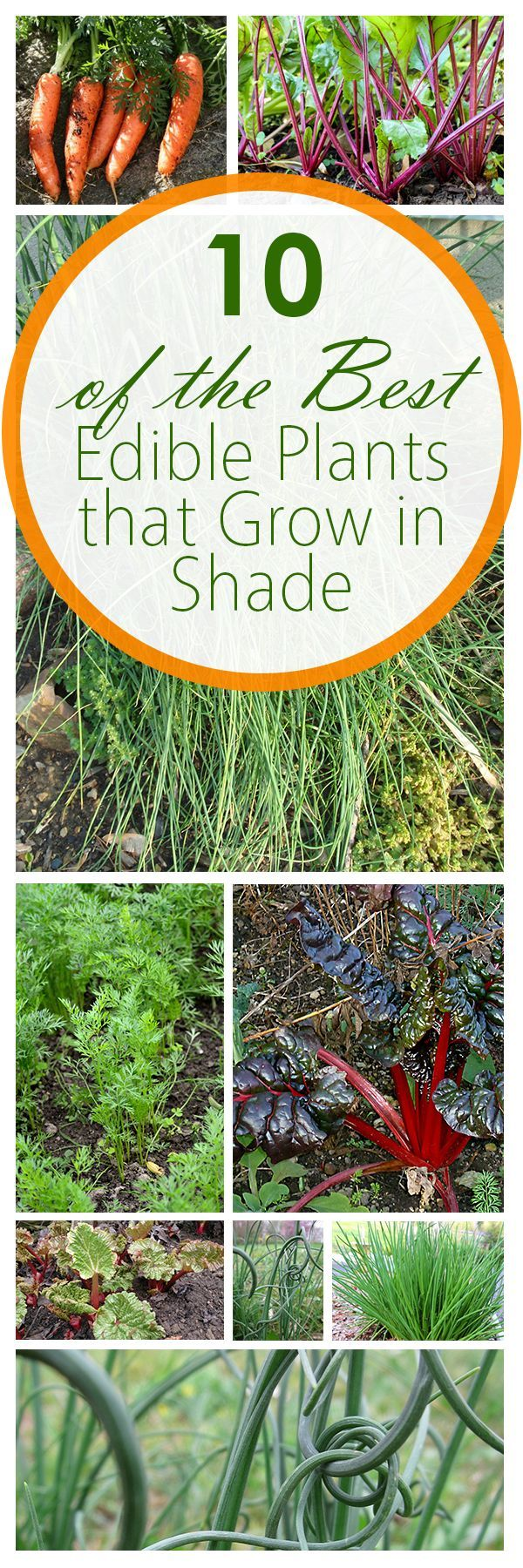 10 of the best edible plants that grow in shade