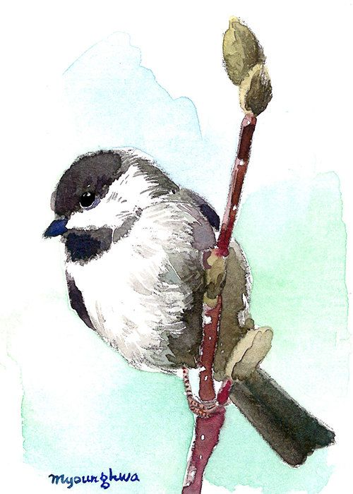 Bird art print of an Original watercolor ACEO Woodpecker ACEO Limited Edition