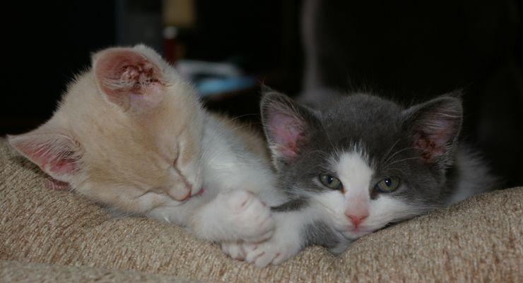 Omg Sooo Cute Kitty Kitten Cat Newborn By Rachel Perkins Kittens Kittens Cutest Newborn Animals