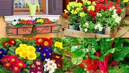 plantas de invierno para el balcn