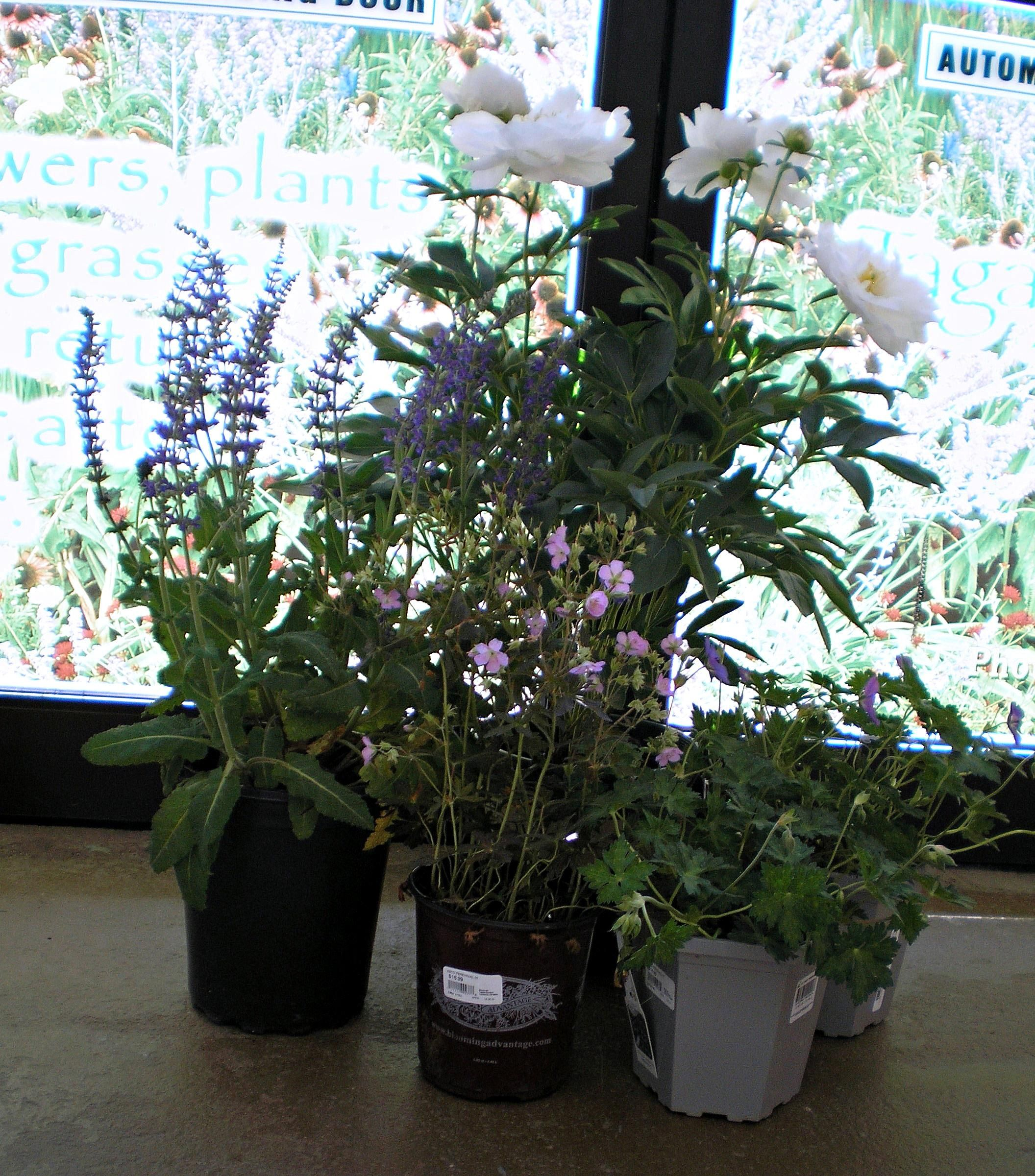 Plants That Come Back Year After Year