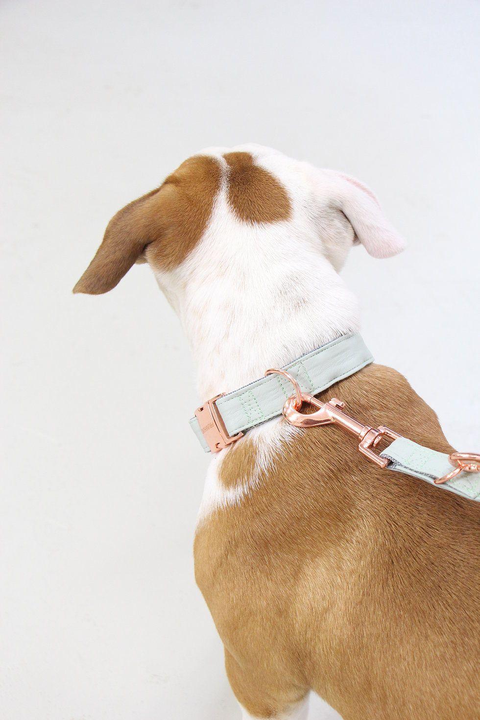Fall In Love The Mint Collar And Leash Set With Rose Gold