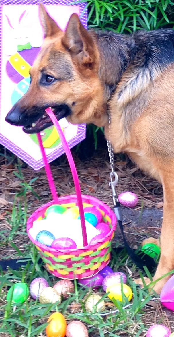 #SULLI #GSD....Easter delivery