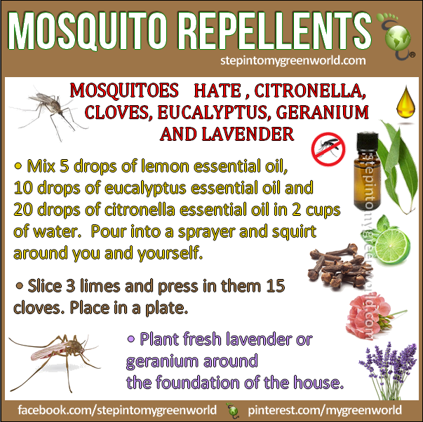 By Popular Demand The Best Mosquito Repellents: They Work!!!! 1