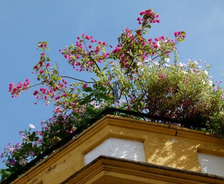 Dachterrasse begrünen und gestalten Praktischer