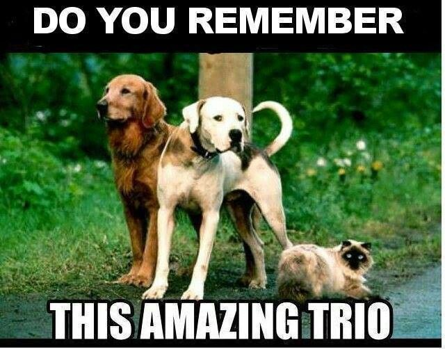 Cats Rule Dogs Drool Childhood Dog Movies Childhood Memories
