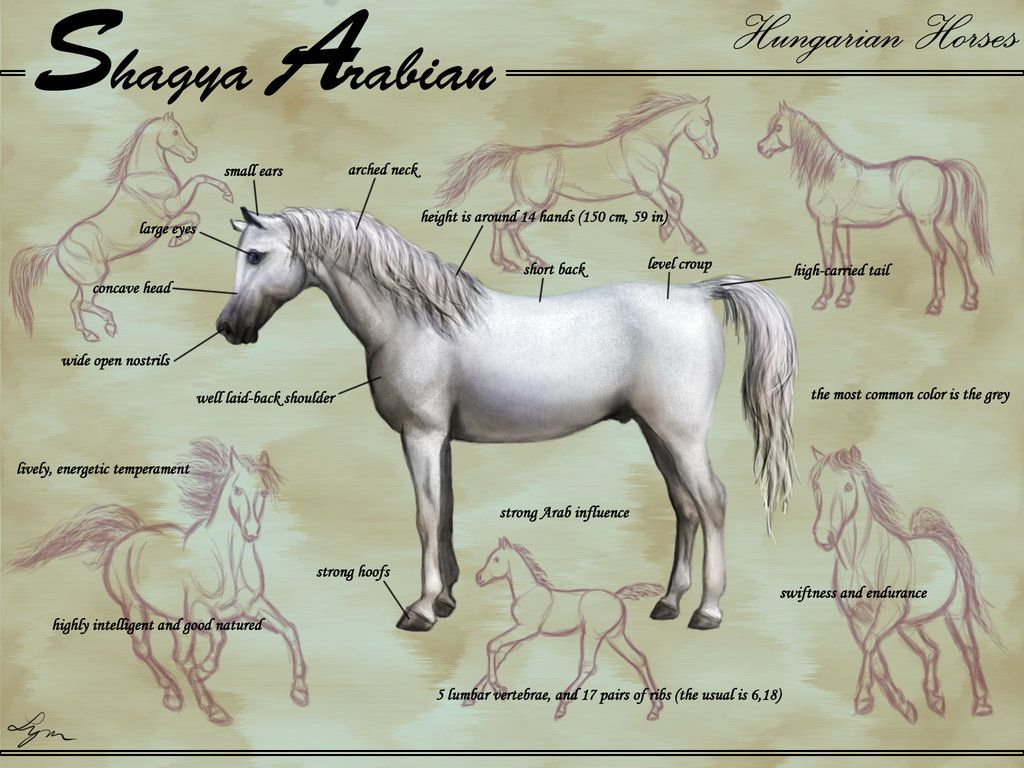 Popular Wallpaper Horse Deviantart - d18a83c10dab26d09cb401743b7d6f91  Pic_76755.jpg
