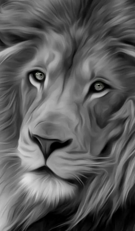 Iphone Wallpaper Black And White Lion Iphone Wallpaper Black And White Lion White Lion Lion Painting