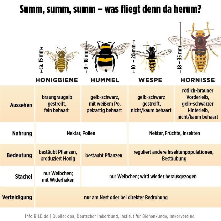 Warum Gibt Es Wespen