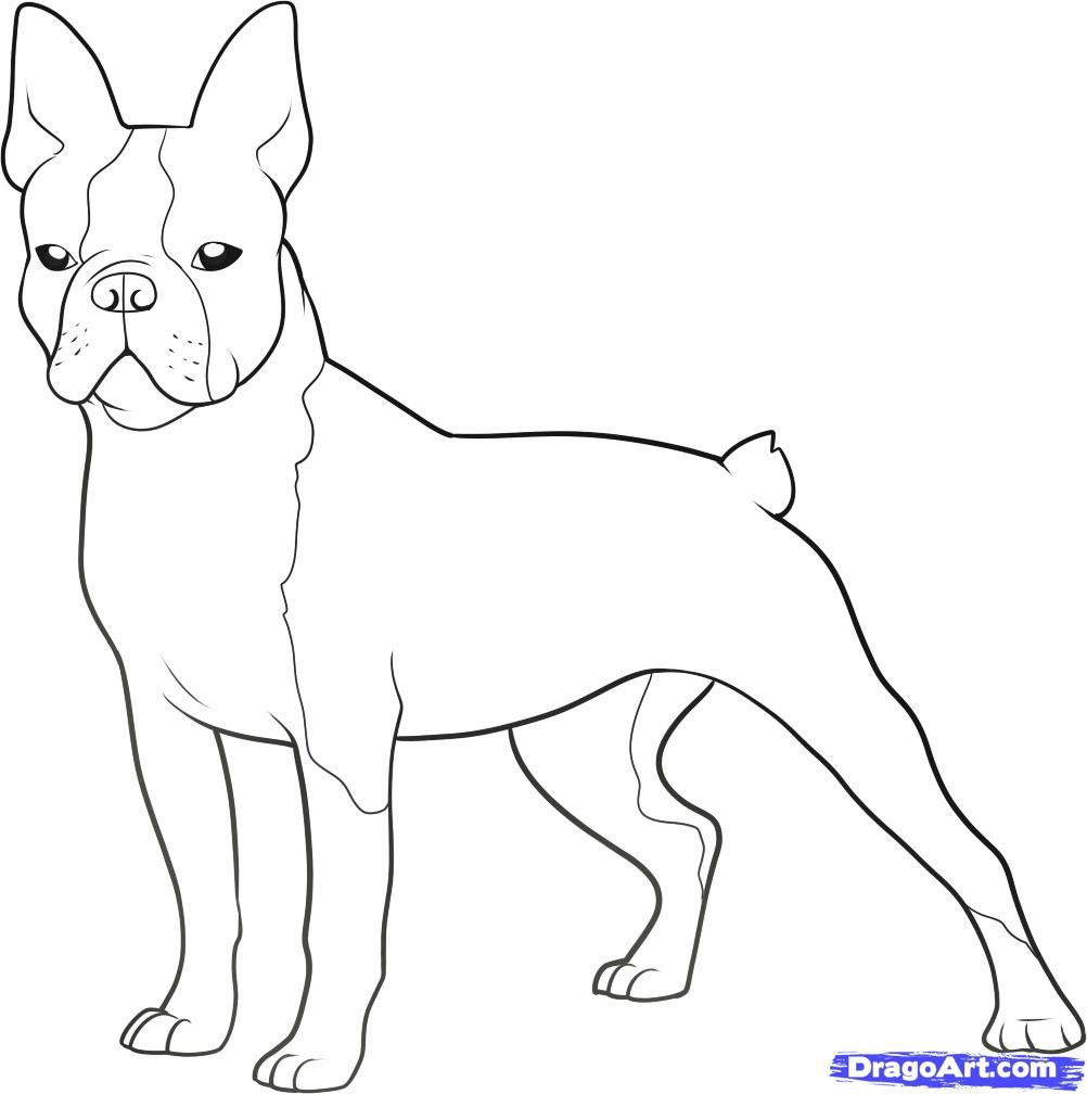 How To Draw A Boston Terrier Step By Step Pets Animals Free Online Drawing Tutorial Added By Da Boston Terrier Art Boston Terrier Tattoo Dog Coloring Page