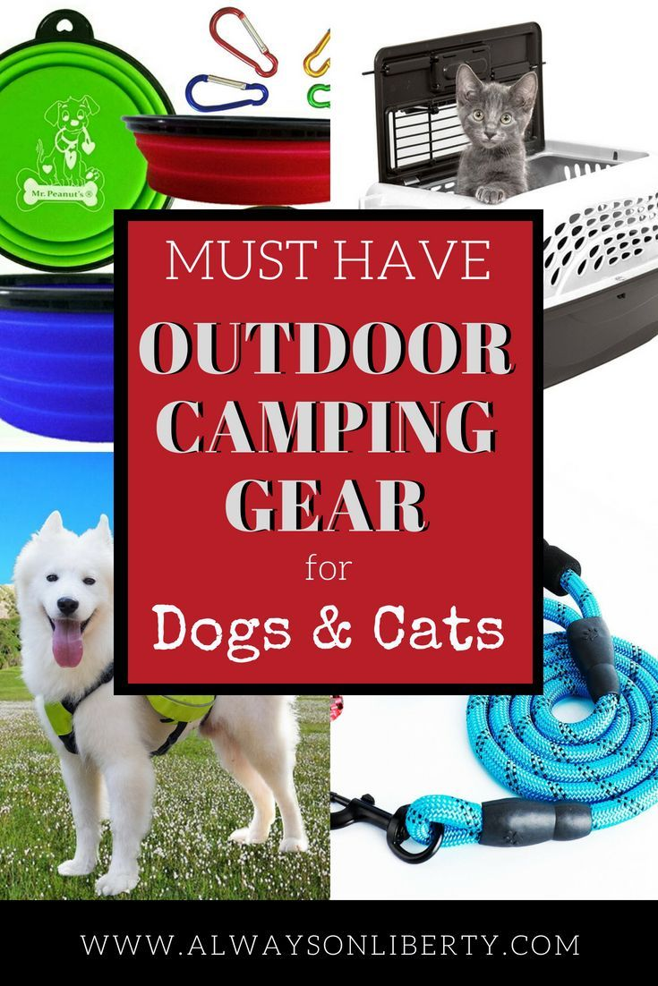 Photo of Cool camping gear for dogs and cats