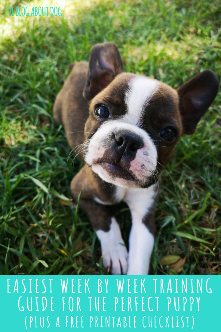 Easiest Week By Week Training Guide For The Perfect Puppy
