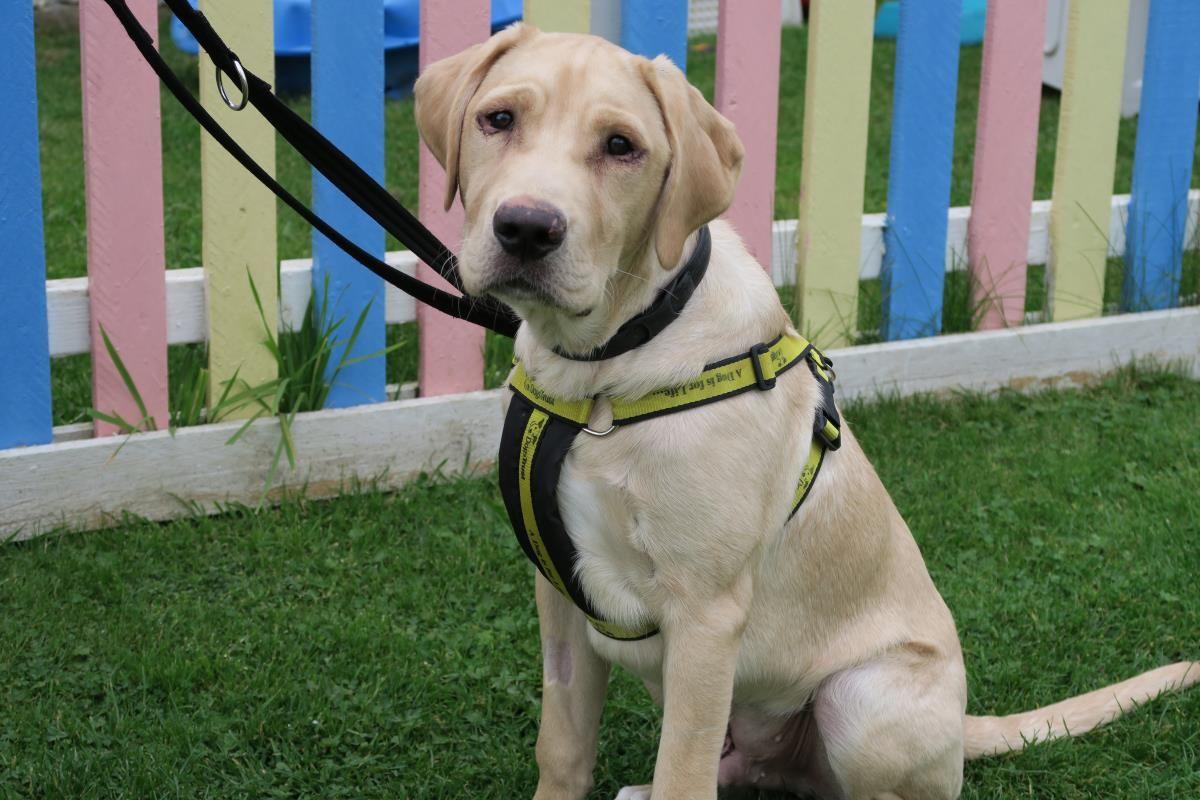 Dogs Trust Drogan Dogs Trust Dogs Rescue Dogs