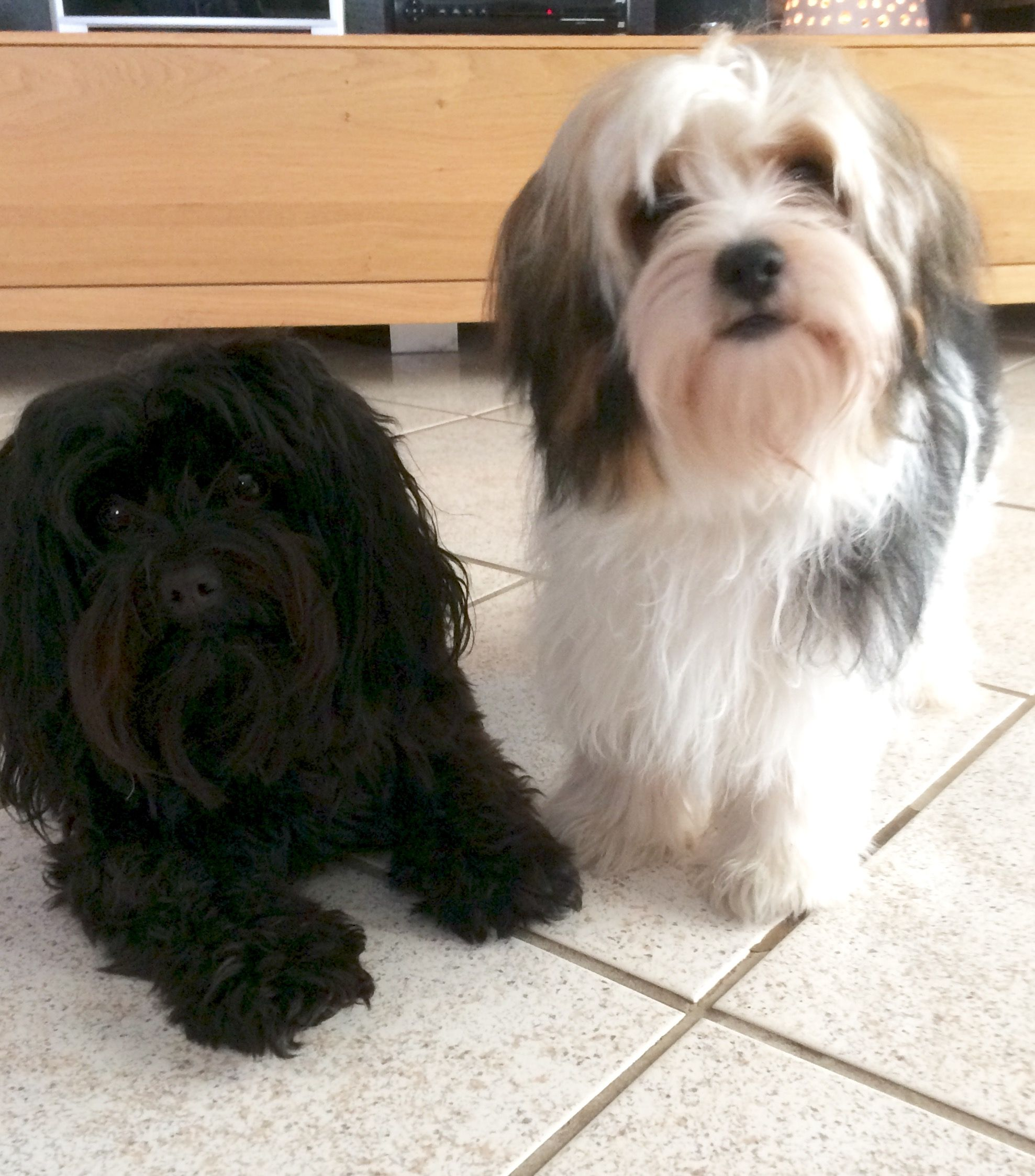 Emil Und Amigo Hunde Lustige Hunde Hundepension