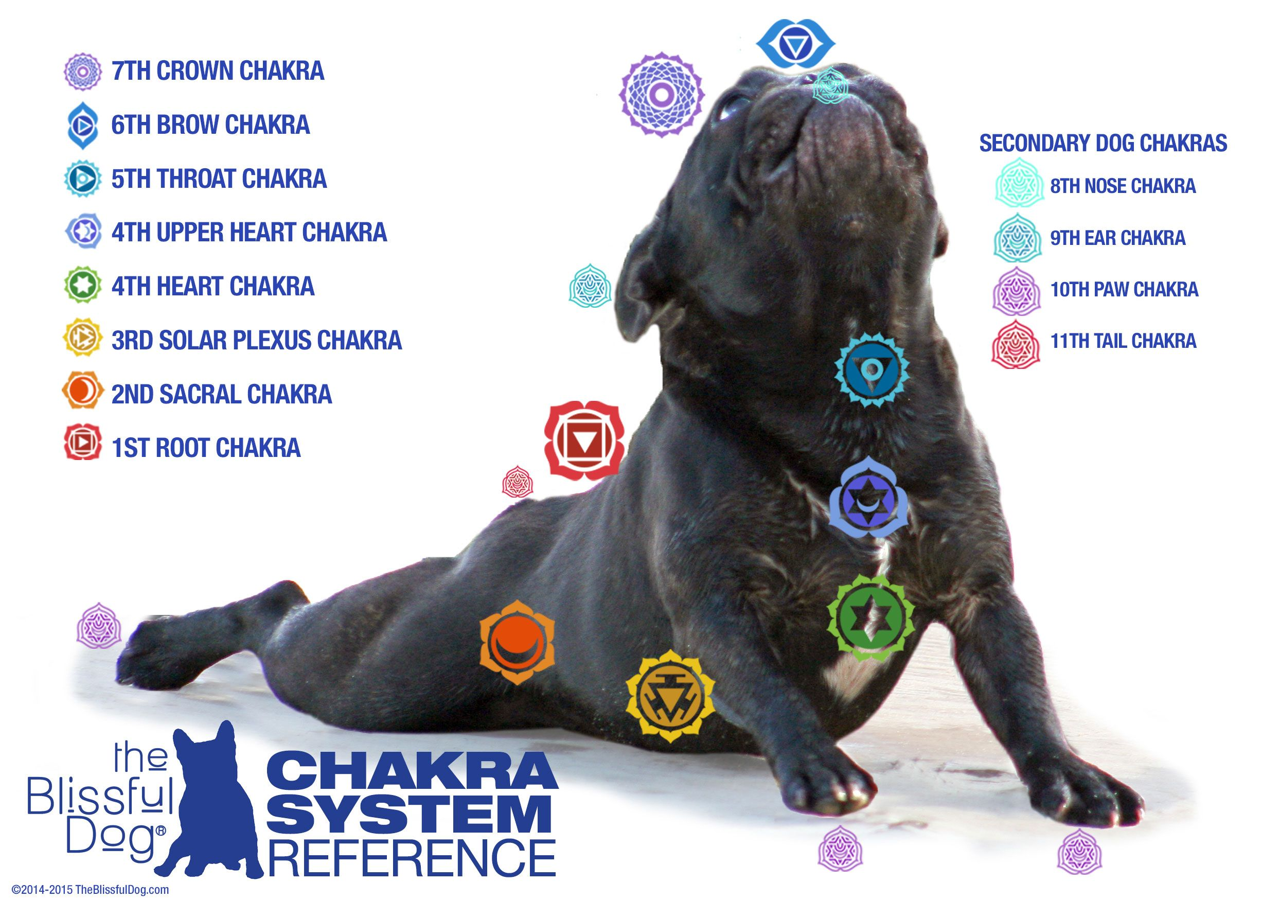 Balance Your Dog S Chakras Pets Pinterest Dogs Pets