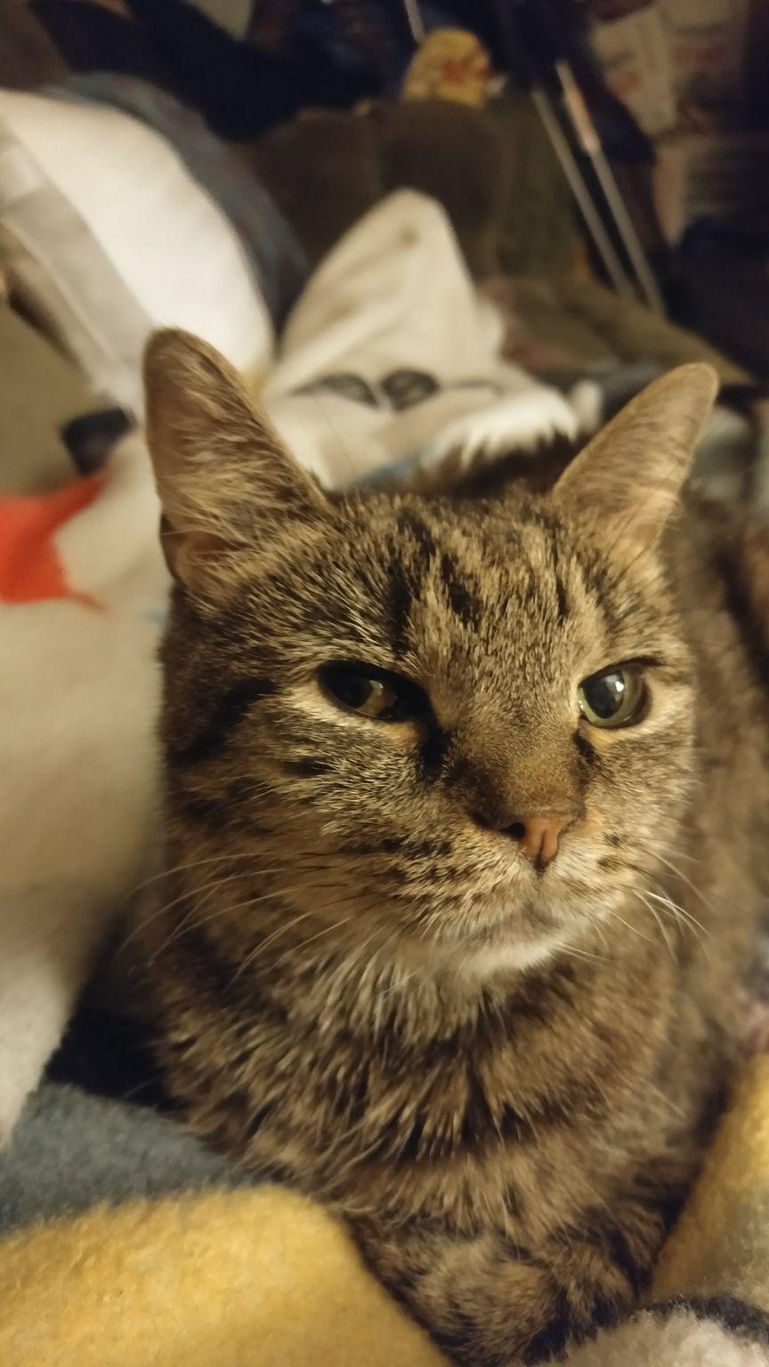 Kitty on my lap http://ift.tt/2grwAvq