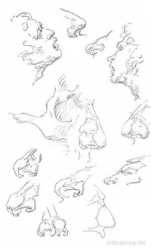 nose anatomy, drawing noses, nose art | George bridgman ...
