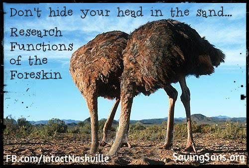 Head in the sand meme | RIC | Animal facts, Ostriches, Animals - photo#6