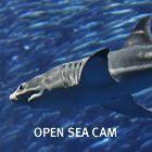 Several different Cameras. Otter Cam, Kelp Cam, Penguin ...